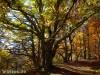 Goldener Oktober am Albtrauf