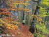 Herbstliche Eindrücke am Albtrauf