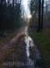 Matschige Waldwege im Wintersonnenlicht