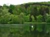 Schwan auf dem Lauchertsee
