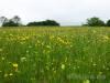 Frühlingswiese - Blümchen zum Muttertag