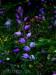 Seltene Wildorchidee: Rotes Waldvögelein