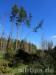 Bannwald im Pfrunger-Burgweiler Ried