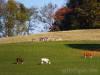 Kühe vor Wildgehege