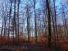 Buchenwälder im Winter