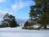 Schneebruch auf der Wacholderheide