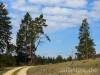Besondere Bäume