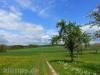 Frühlingswiesen auf der Albhochfläche bei Dürrenstetten