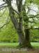 Beeindruckende alte Bäume am Reichhardsberg