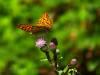 Schmetterlinge und Zecken
