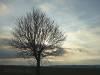 Baum im Winterlicht