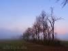 Hecke vor Abendrot und Nebel