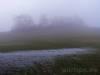 Hecke im Nebel