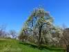 Wiesenwege im Frühling