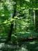 So ein schöner Wald!