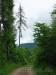 Kranke Bäume auf dem Weg zum Wasserfall