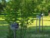 Hasel- und Walnussbäume