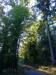 Im Wasenwald