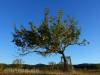 Baum mit Albtrauf