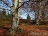 Alte Bäume am NSG Lengenloch