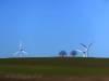 Windräder und Bäume