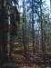 Wald am Wildgehege