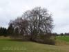 Baum über Doline