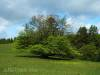 Weidebaum, unten abgefressen