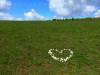 Ein Herz für die Alb