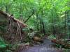 Im Nationalpark Kellerwald-Edersee