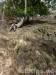 Trockene Steinhalden