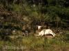 Ziegenweide im Schöntal