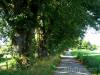 Allee von Heiligenberg zum Friedwald