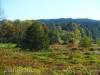 Vegetation rund um die vielen Schleifen der Fehla