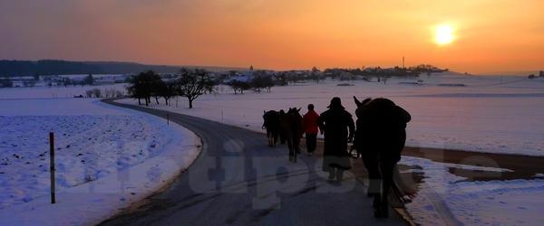 Kurz vor dem Tagesziel beim Winterwanderritt