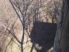 Schatten auf dem Waldboden