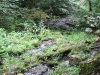 Quelle der Brühlbaches