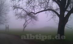 Keltengräber im Nebel (Burrenhof)